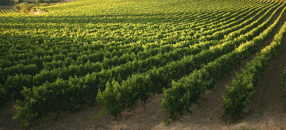 A Changing Landscape: Old Terroir, New Traditions