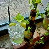 Summer's Best Gin and Tonic Recipes