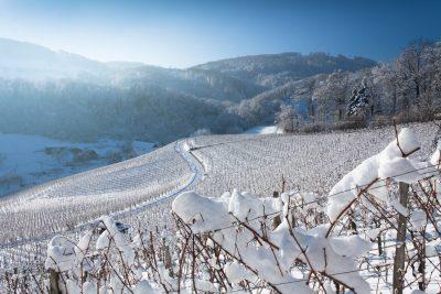 Snowy Vineyards